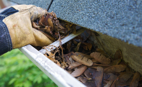 Residential and commercial buildings should remove standing water, leaves and debris from gutters to remain pest free as shown.