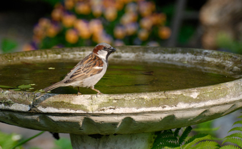 Between pest maintenance visits from Bigfoot Pest Control, this dirty bird bath needs to be cleaned regularly by the home owner and have water replaced daily.